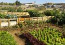 """Cooperativa agroecológica """"La Acequia"""""""