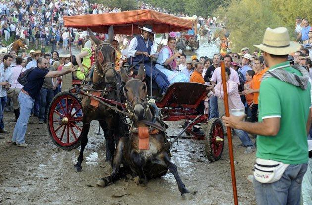EQUO llama a vivir las romerías sin maltrato animal y respetando los espacios naturales