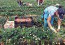 El PCA plantea modificaciones a la PAC y sanciones a empresas para evitar el abuso laboral en el campo andaluz