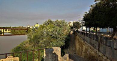 Sobre la vegetación del río Guadalquivir a su paso por Córdoba