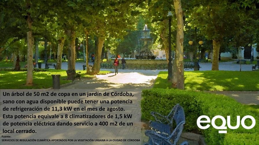 EQUO alerta sobre la urgente necesidad de más árboles, más bosques y más sombras en Córdoba y provincia