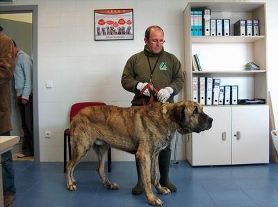 El Centro del Control Animal de Sadeco esclarece las dudas habituales en relación al abandono animal