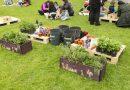 Medioambiente organiza un nuevo ciclo de cursos de formación sobre huertos urbanos ecológicos de otoño