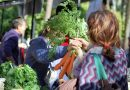 EQUO reclama a la Junta un plan de compra púbica ecológica y más coherencia