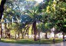 Infraestructuras evalúa el estado de pinos y abetos en cuatro zonas de la ciudad