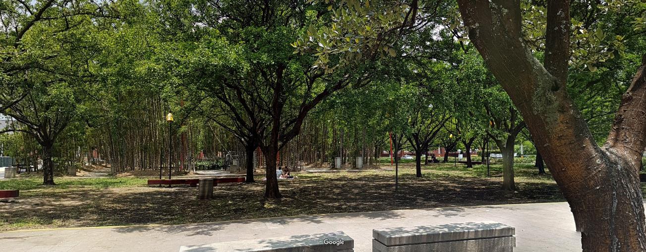 Ecologistas en Acción Córdoba muestra su indignación por el recorte en el presupuesto municipal de plantación de árboles.