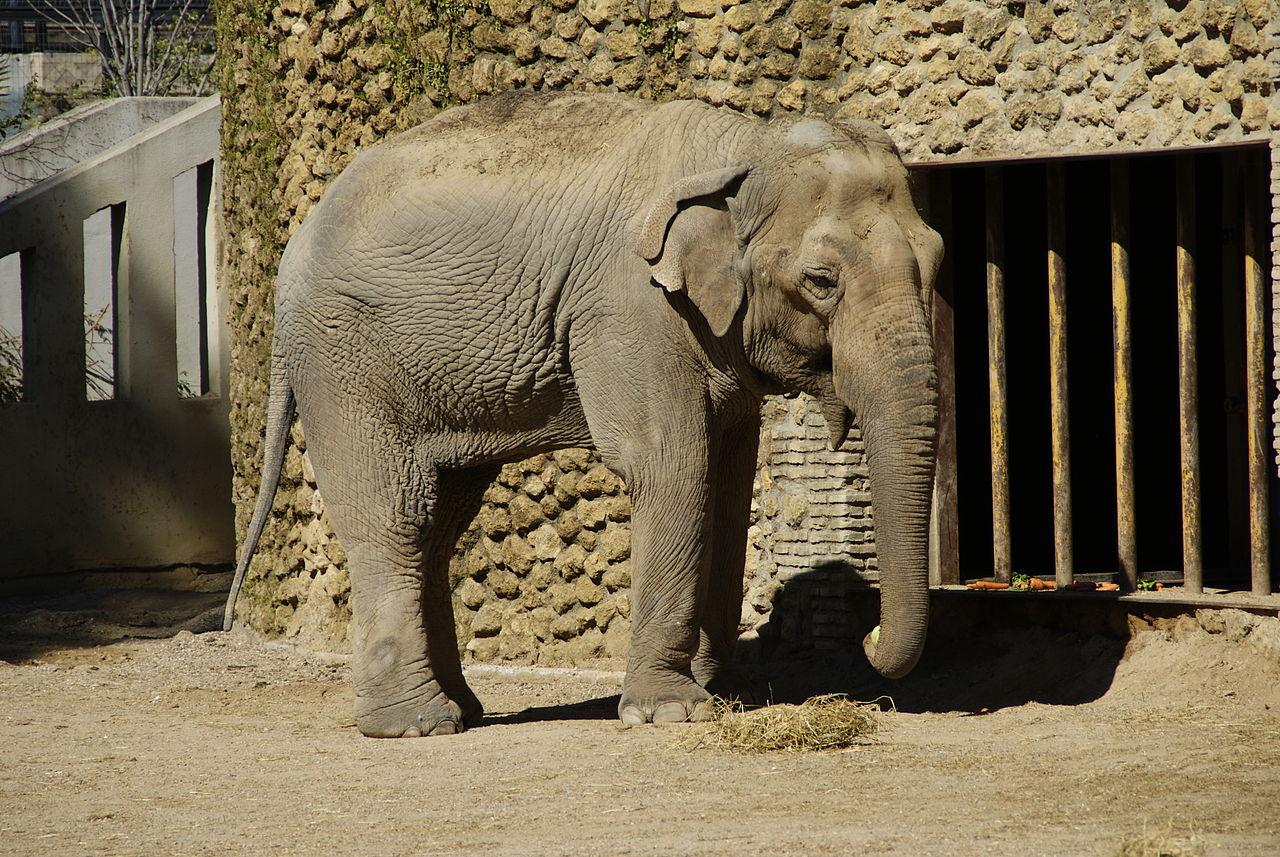 EQUO insiste en que el zoológico de Córdoba se transforme en un centro de protección de la fauna autóctona