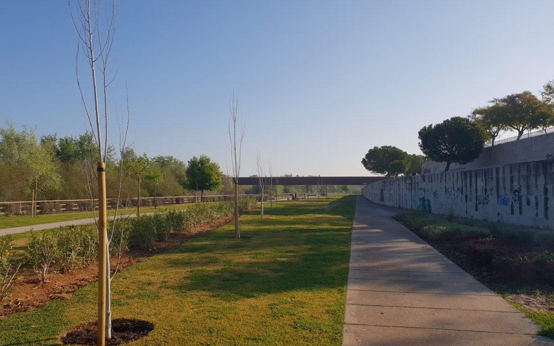El Parque de Miraflores cuenta con 52 nuevos árboles recién plantados