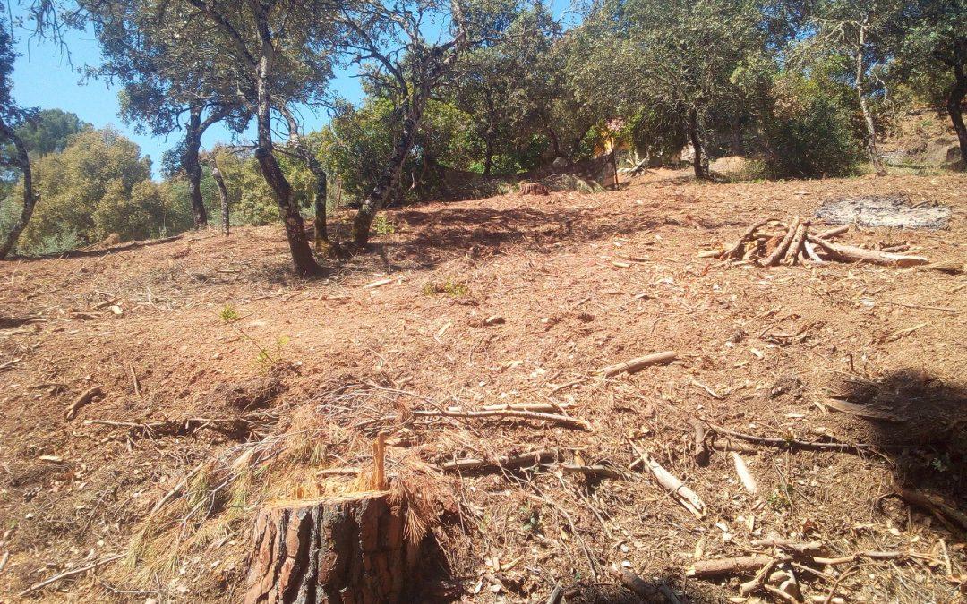 Ecologistas en Acción denuncia actuaciones ilegales en El Salado