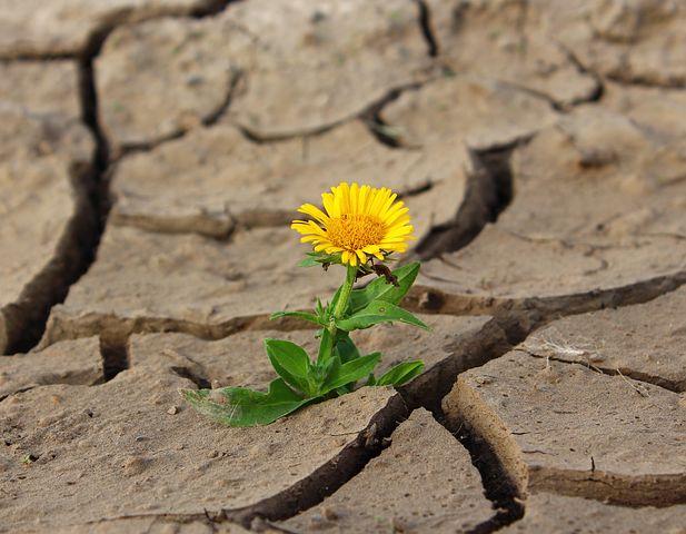 Las consecuencias del cambio climático