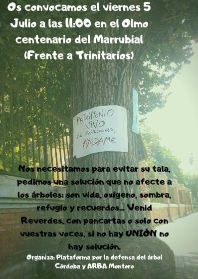 Inician una campaña de firmas para salvar al olmo del Marrubial