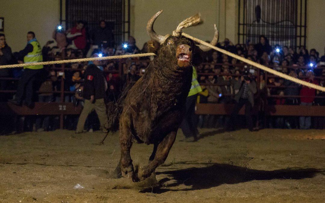 Las fiestas patronales o el gamberrismo con animales