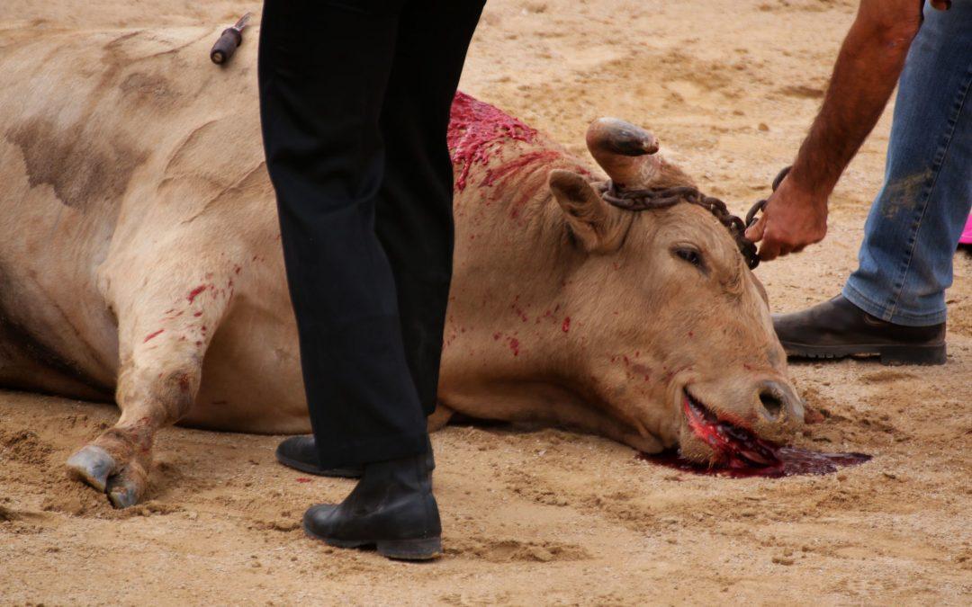 La Córdoba vaciada se divierte con el sufrimiento animal