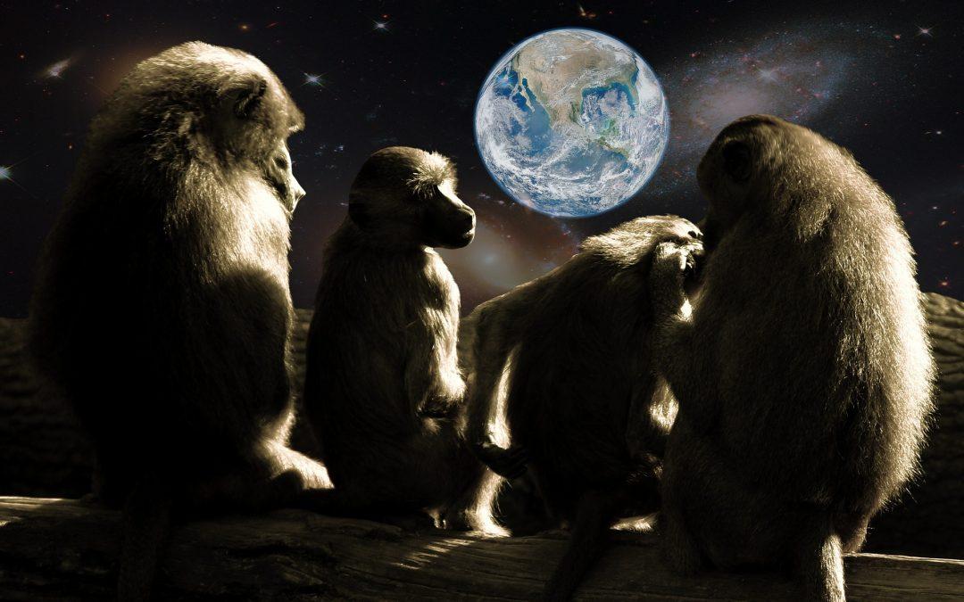 """""""El planeta de los simios"""" para reflexionar sobre el papel humano en el mundo"""