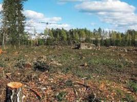 """XXIII Campaña """"una andaluza, un árbol"""" de Ecologistas en Acción."""