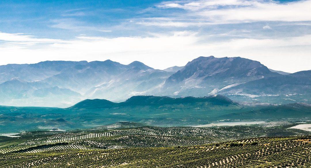 35 años de la Ley de Reforma Agraria de Andalucía: ¿la tierra está hoy en menos y peores manos?
