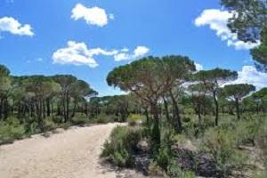 Ecologistas en Acción Andalucía solicita la suspensión de la próxima peregrinación rociera en el Espacio Natural Doñana