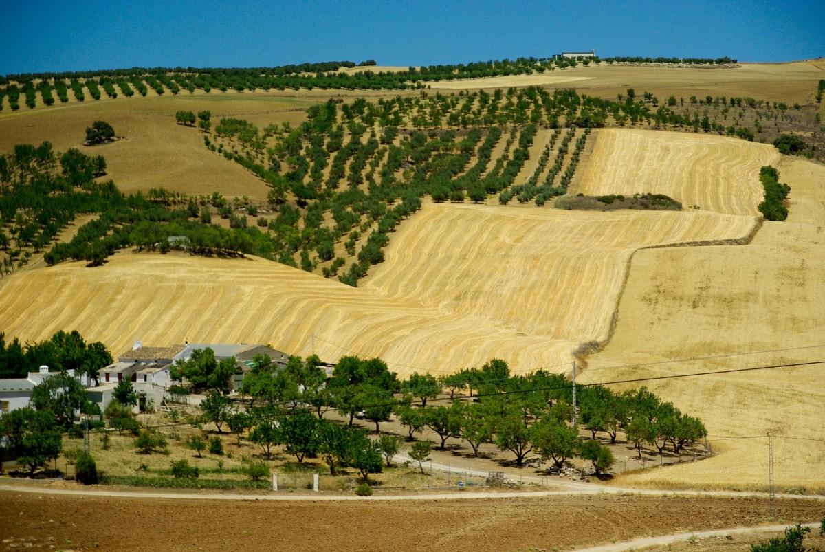 Campos de sangre en la Andalucía del siglo XXI