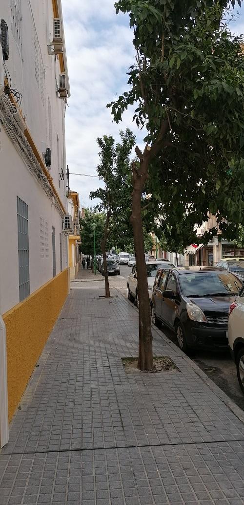 Plan del arbolado en Córdoba