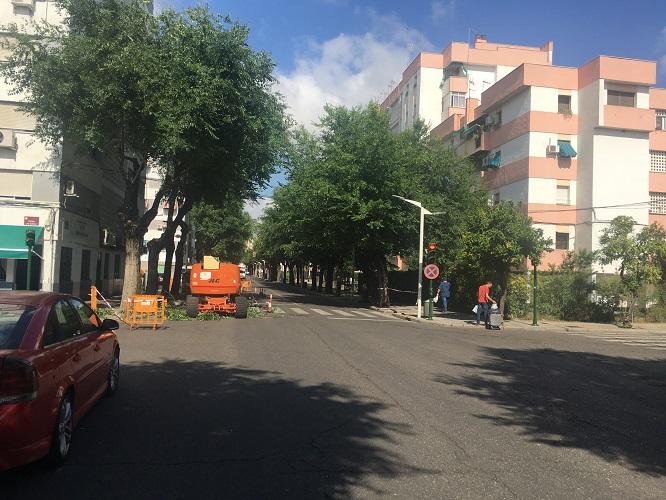 Árboles en Avenida Virgen de la Milagrosa