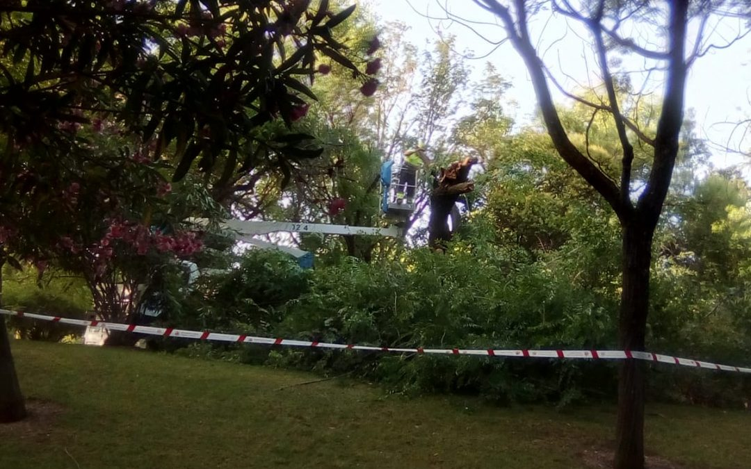 Podas salvajes en el Parque Cruz Conde