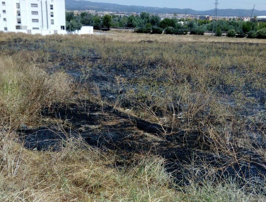 La A.V. Guadalquivir del Campo de la Verdad denuncia la falta de mantenimiento en las zonas verdes del barrio