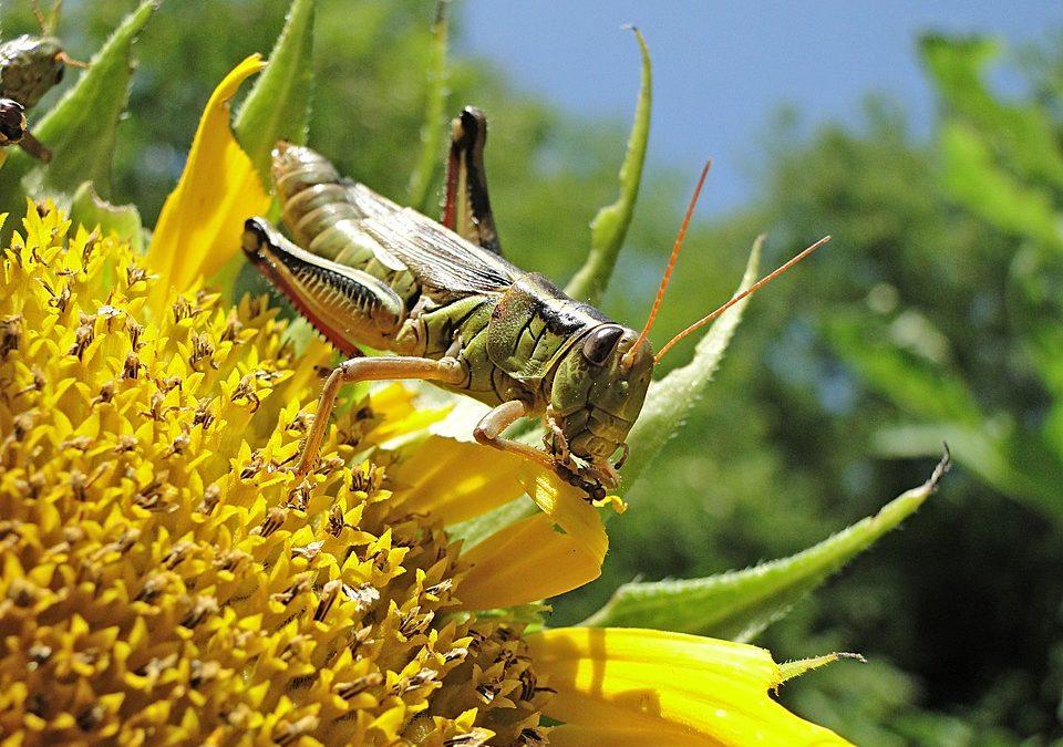 La importancia del equilibrio ecológico y la biodiversidad.