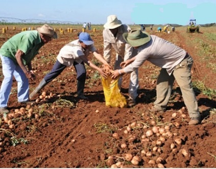 CTA lamenta la inacción de la inspección de trabajo ante la explotación en el campo