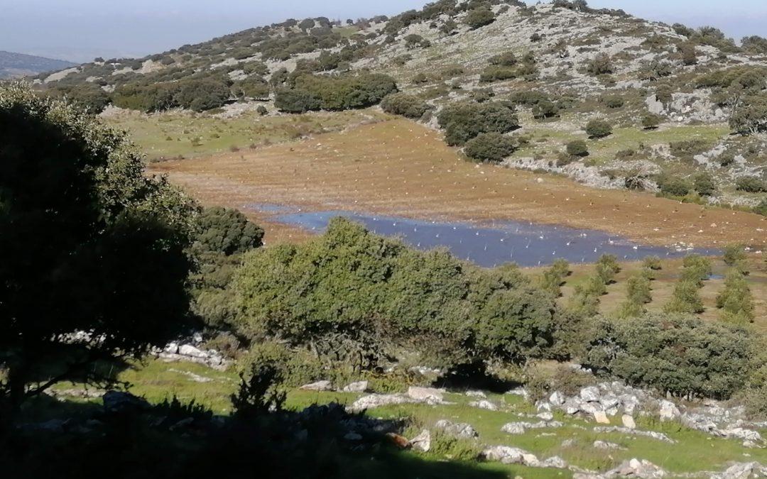 Ecologistas en Acción exige a la Junta que obligue a restituir un terreno forestal plantado con olivos en Zuheros