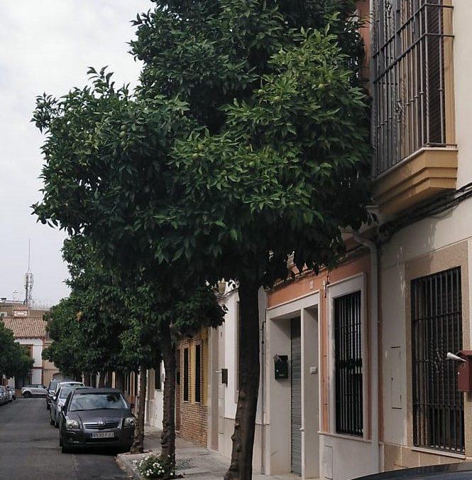 El Consejo del Movimiento Ciudadano urge a comenzar una poda controlada en toda la ciudad