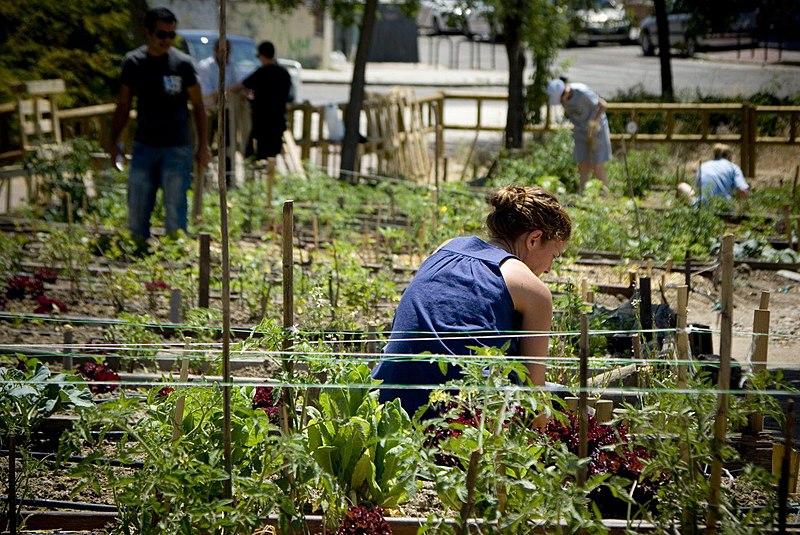 Al-Zahara reivindica los huertos urbanos en un momento clave  de crisis sanitaria