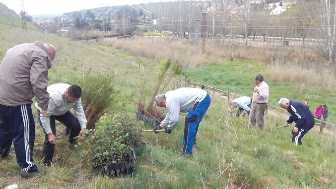 """Ecologistas en Acción Andalucía pone en marcha la campaña """"Una andaluza, un árbol"""""""