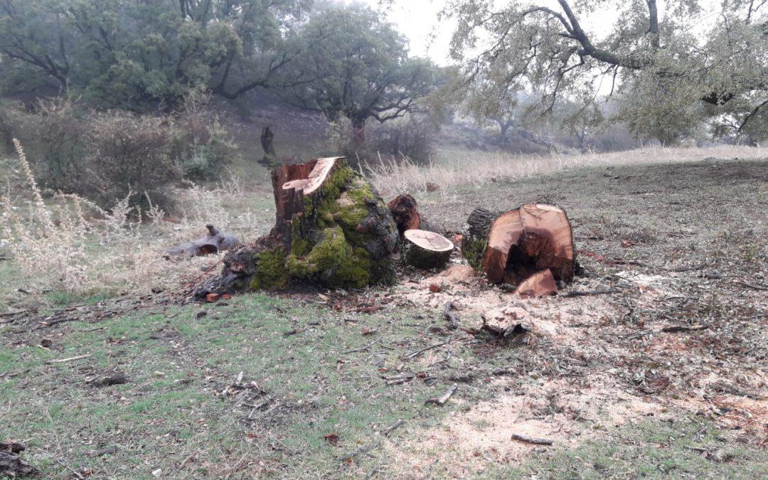 Ecologistas en Acción denuncia que ENDESA destroza árboles centenarios en el Parque Natural de las Sierras Subbéticas.
