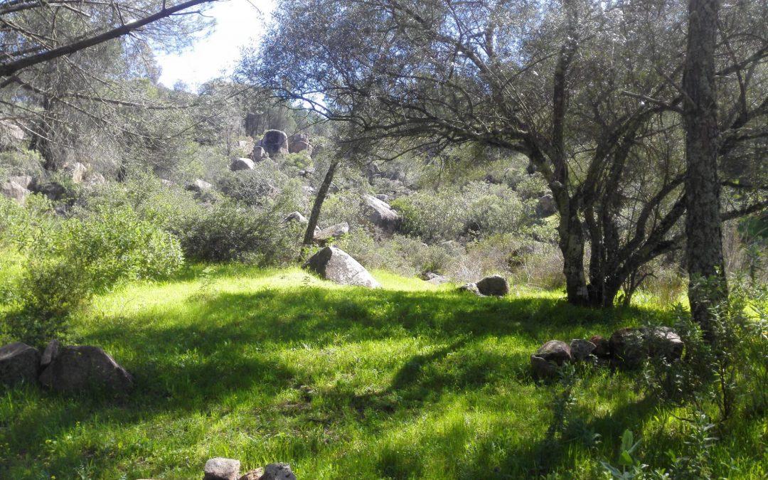 Ecologistas en Acción denuncia malas prácticas forestales en los Villares