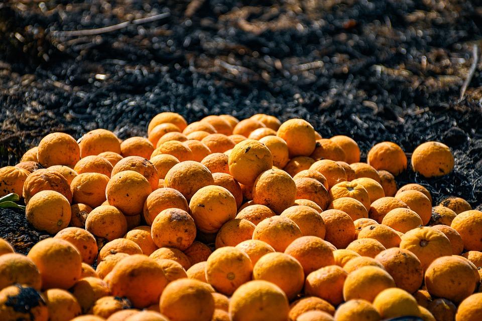 CTA denuncia la perdida de jornales en la naranja que puede dificultar el cobro del desempleo agrario
