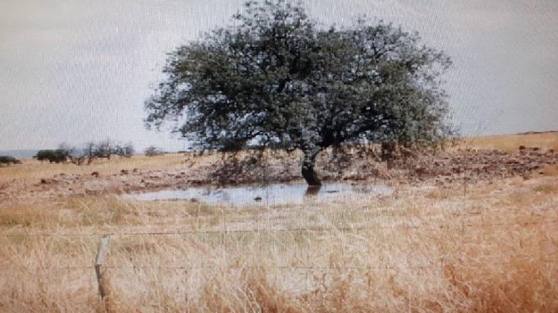 Ecologistas en Acción solicita a la Junta la regulación del despliegue de parques fotovoltaicos y eólicos en Andalucía