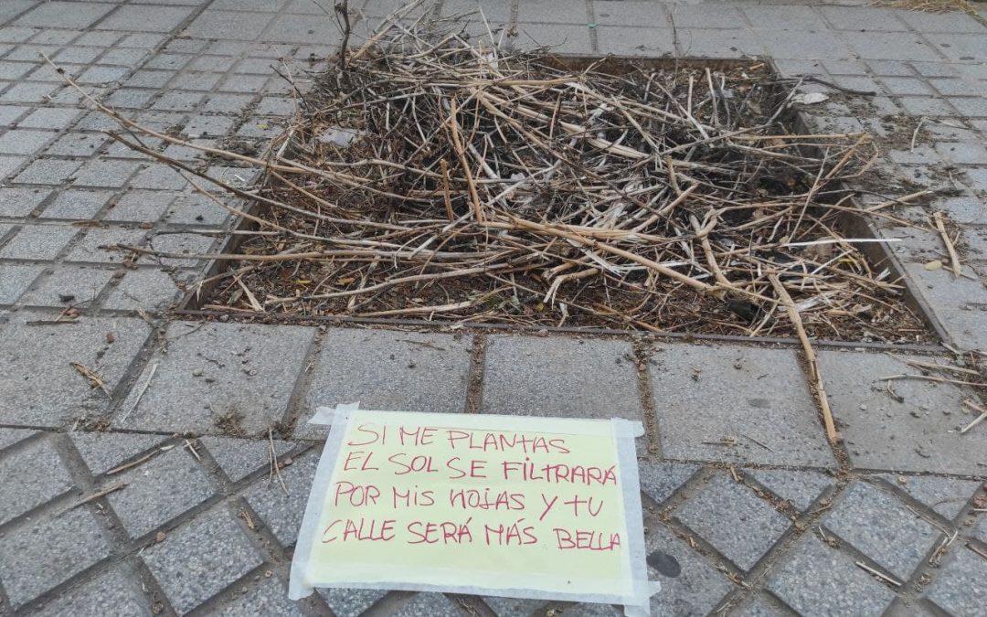 Vecinas y vecinos de Córdoba siguen reclamando árboles para hacer frente a los efectos de la crisis climática