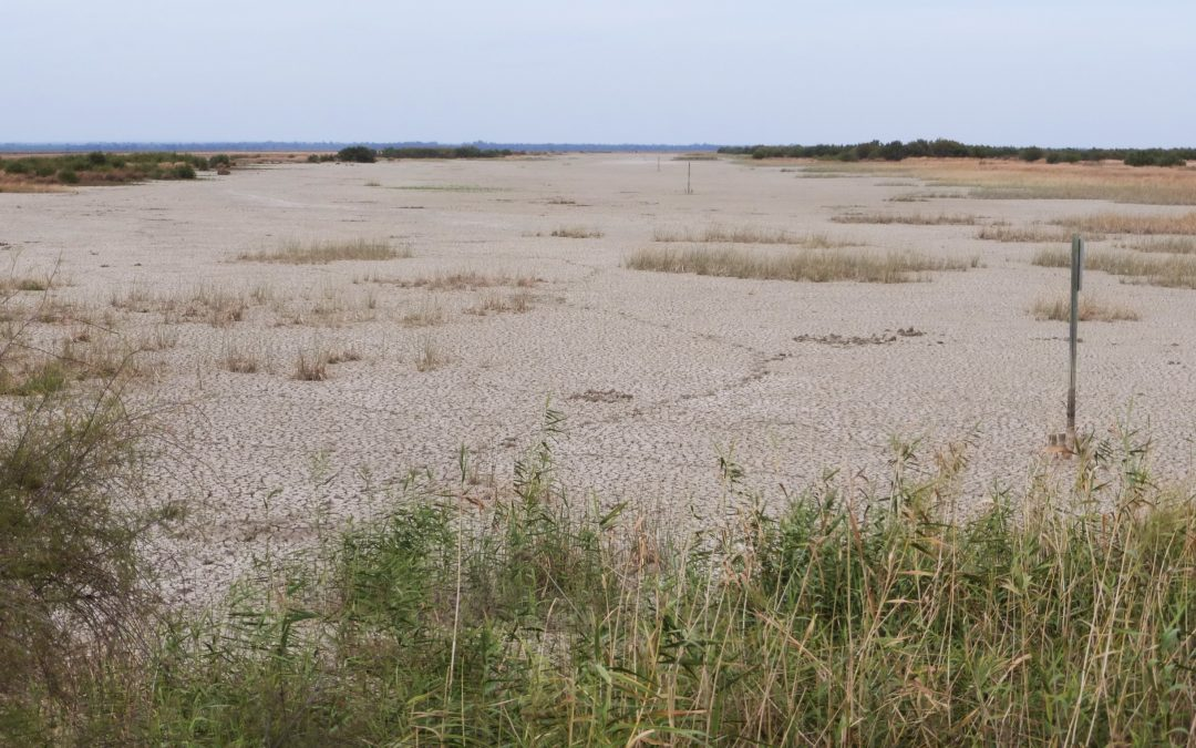 Ecologistas en Acción continua proponiendo la recuperación de los sistemas hídricos de Doñana
