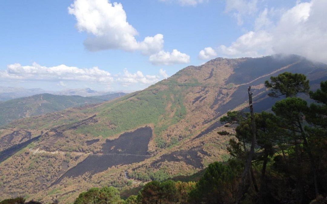 Ecologistas en Acción exige un Plan de Restauración forestal urgente para Sierra Bermeja, y su protección como Parque Nacional.