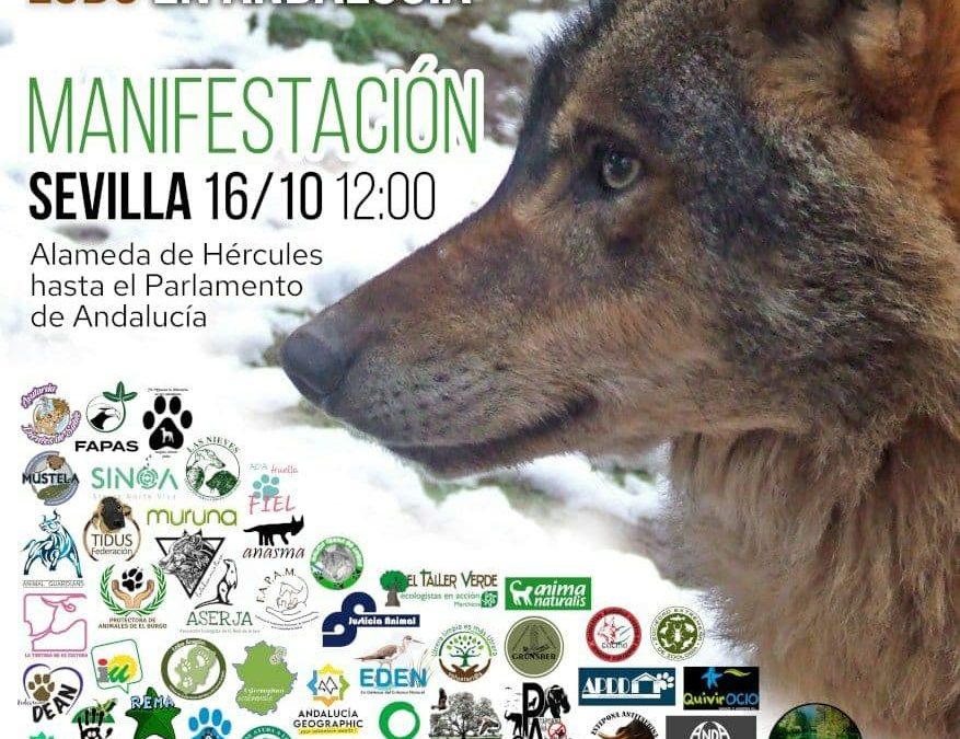 Varias organizaciones sociales y políticas convocan una manifestación en Sevilla por la recuperación del lobo en Andalucía