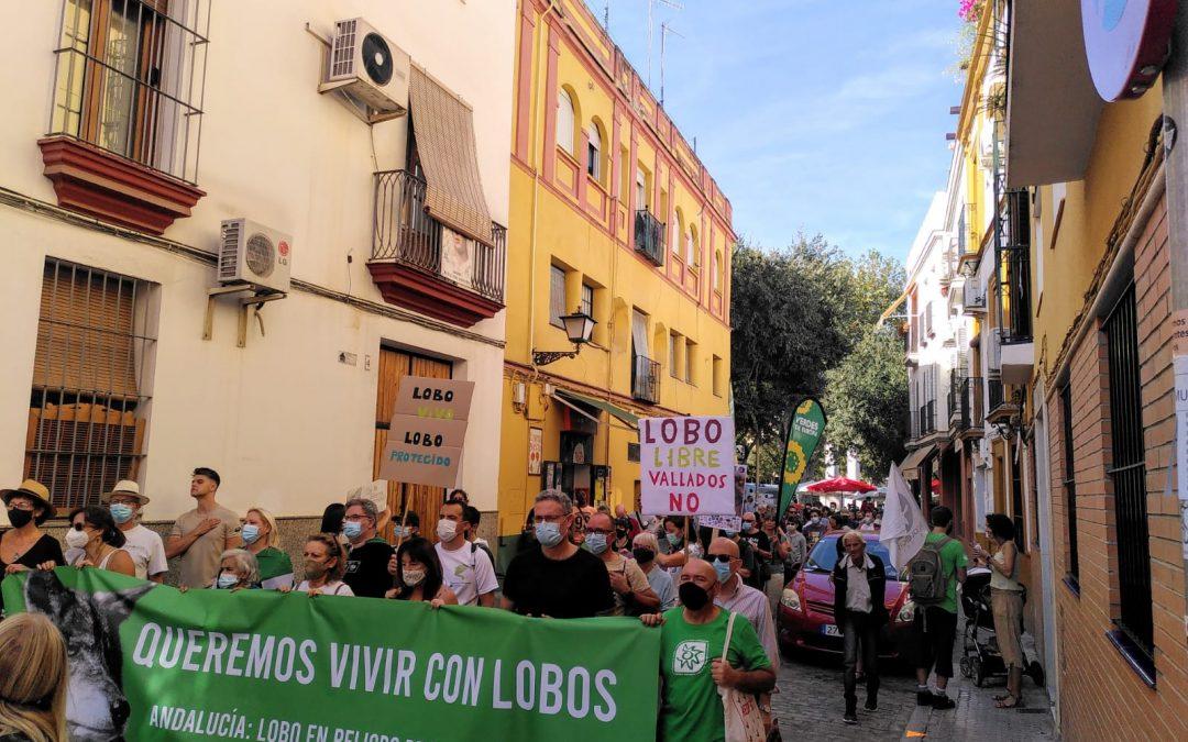 Manifestación en Sevilla por la vuelta del lobo a Andalucía