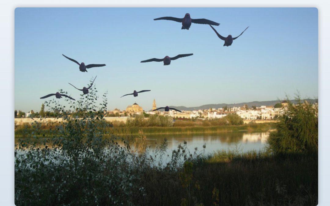 """Paseo """"crítico"""" por el Guadalquivir, organizado por la Plataforma por un Río Vivo"""